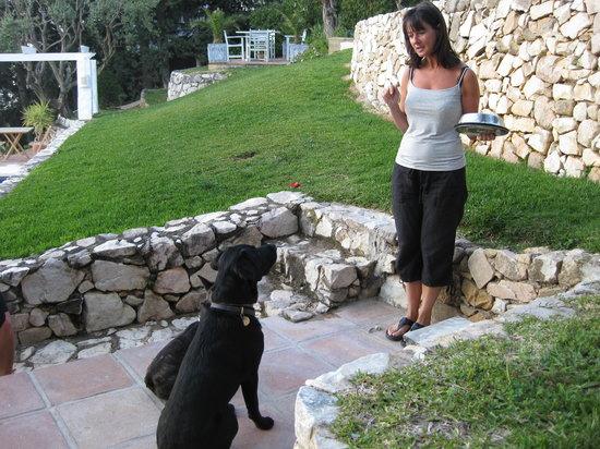 Casa Ventura: Melanie , Bibi and Omah ( déjeuner pour les chiens )