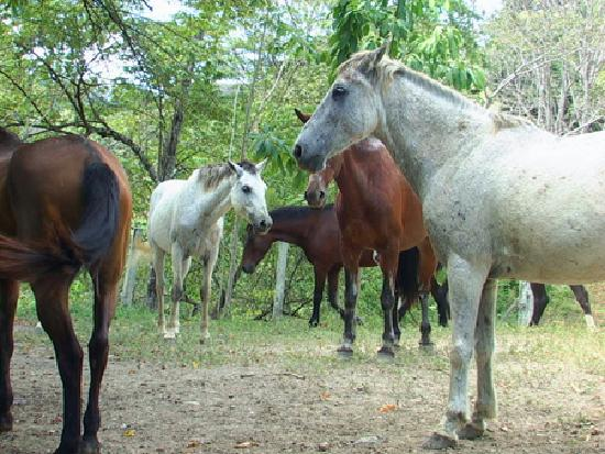 Star Mountain Jungle Lodge: 6 horses on the property