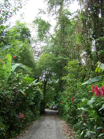 Congo Bongo Ecolodges Costa Rica: The driveway from the main road to houses