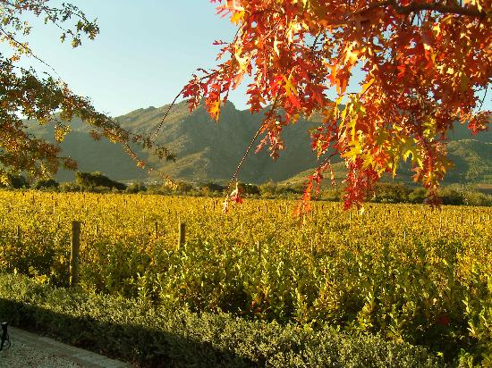South Africa: The Winelands - Franschhoek