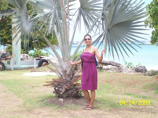 Pirate's Inn: me near a beautiful tree in lovely sunny barbados