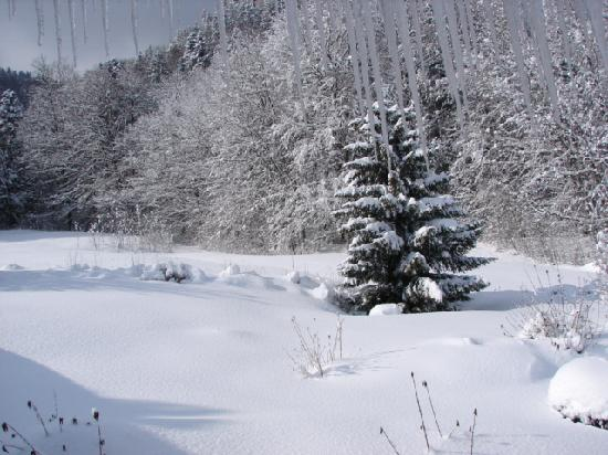 Gästehaus-Pension Zeranka: white garden