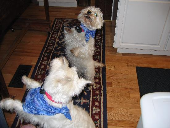 Phineas Swann Bed and Breakfast Inn: Emma and Bobo the house dogs will greet you when you arrive