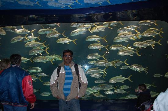 Restaurants Near Atlanta Ga Aquarium