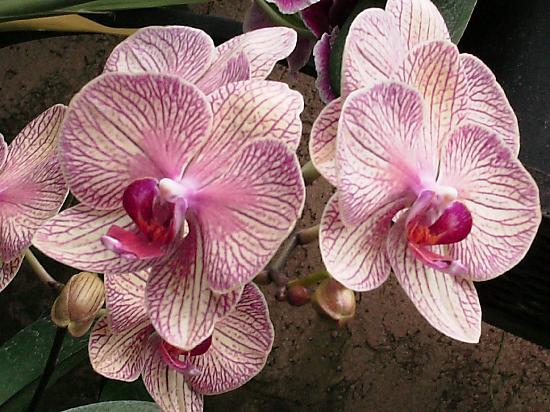 Hilton Garden Inn Kennett Square: Orchids