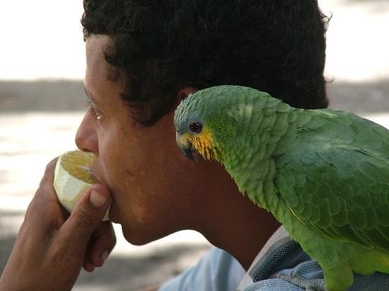 Porto Seguro, BA: papagaio