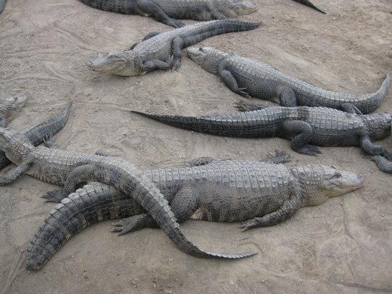 Colorado Gators Reptile Park: Gators