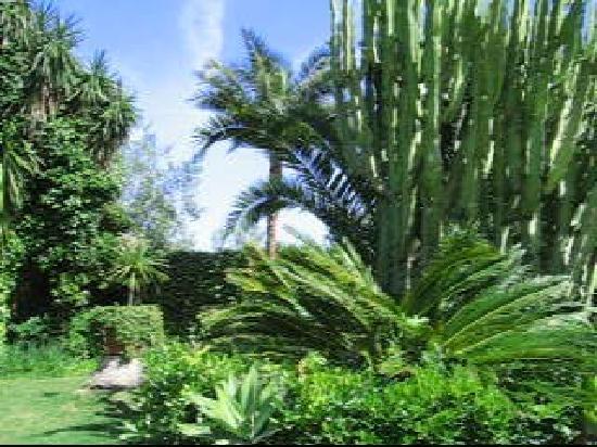 Albero Lodge: Rincón del jardín