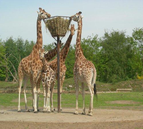 Beekse Bergen Safari Park: safari by car