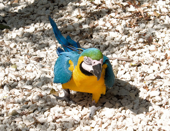 Dolphin Cove: Parrot walking up to me