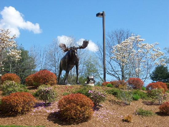 Hampton Inn Freeport/Brunswick : Moose Statue
