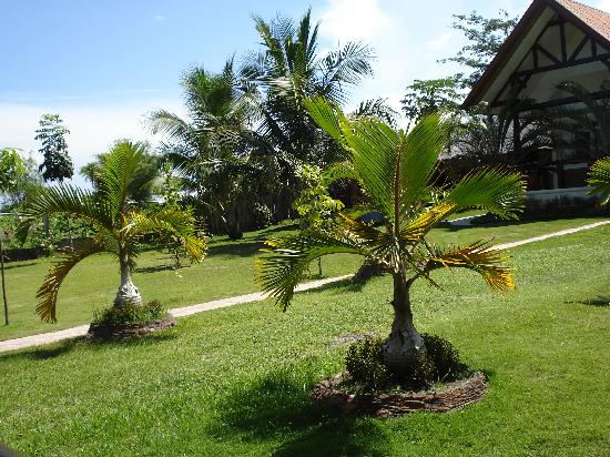 Dauin, Philippines: The garden near the sea
