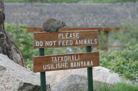 Tanzania: dura scelta