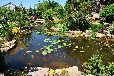 Tulsa linnaeus teaching gardens tripadvisor for Koi pond quezon city
