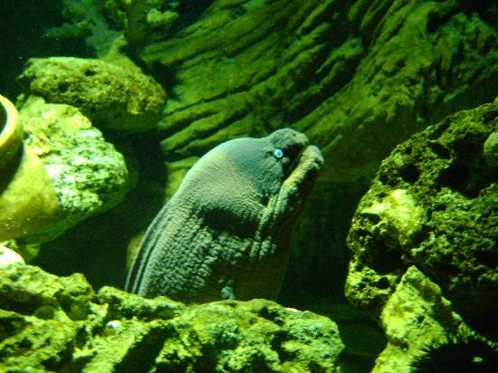 Aquarium Sea Life Benalmádena: Eeley encounter