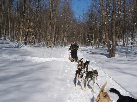 Silent Sport Lodge Bed and Breakfast: Dogsledding