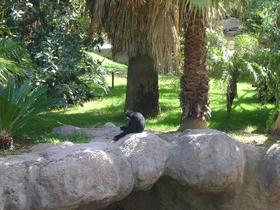 Bioparc Fuengirola : Monkeying around