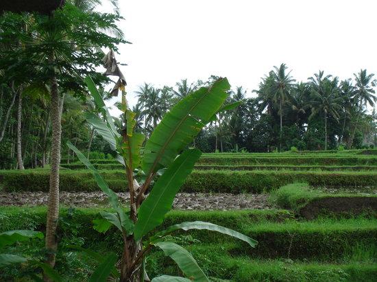 Villa Orchid Bali: Blick zu den Reisterrassen von Villa Orchid aus