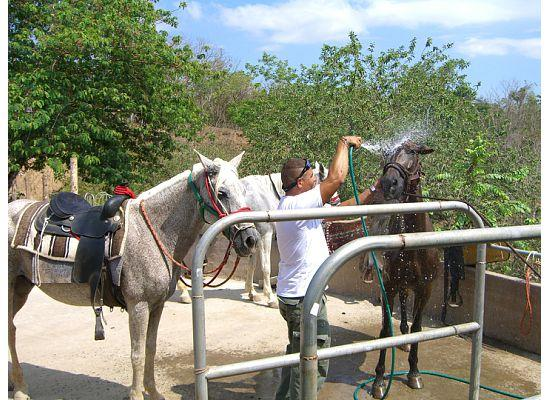 Nature Lodge Finca los Caballos: Milo cools down the horses after our long ride