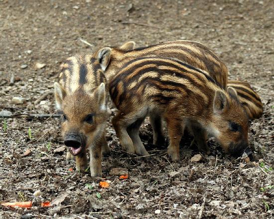 Omega Park: Piggly Wigglies
