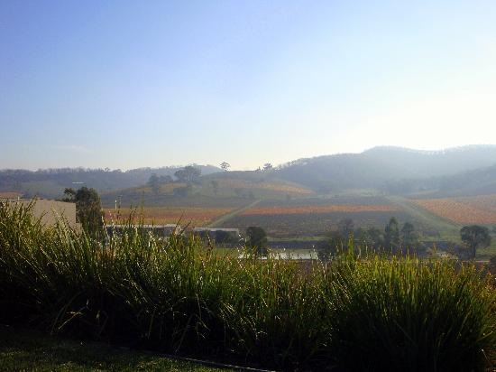 Dixons Creek, Australia: hazy autumn day in the vineyard