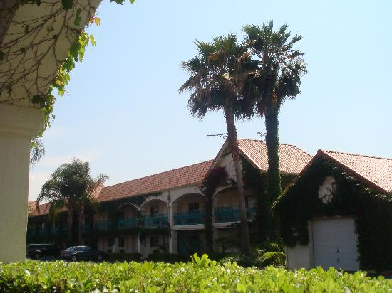 Dynasty Suites Redlands: GREEN VINES VERYWHERE