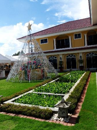 The Peacock Garden: peacock garden resort