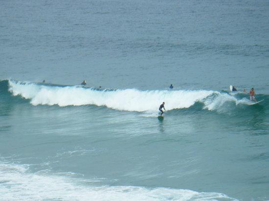 let s go surfing sydney - photo#31