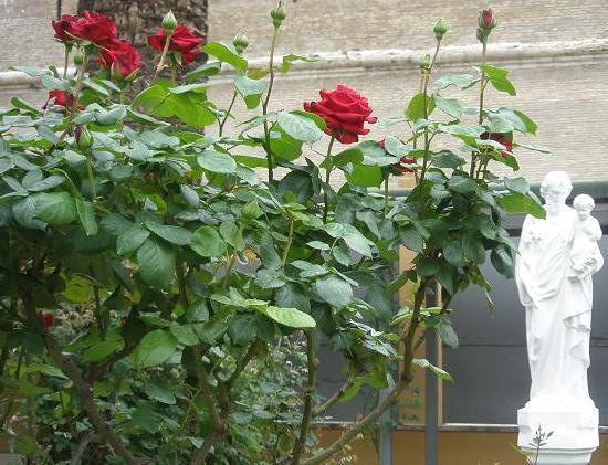 San Giuseppe Della Montagna : The garden is beautiful!