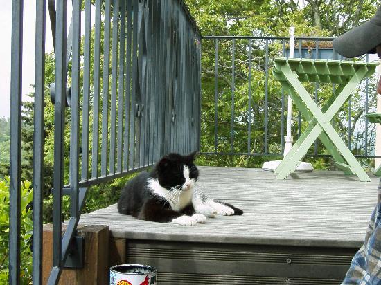 Domaine de Fraisse: Misty die Hauskatze