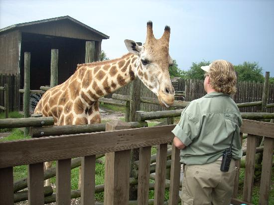 Wild Adventures Theme Park: Feeding the giraffe