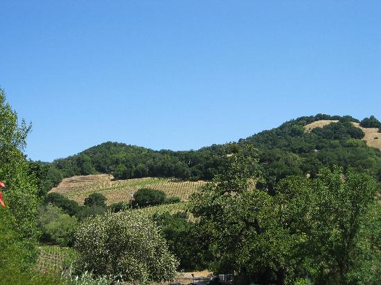 Auberge Sonoma: View from Ravenswood Winery, Sonoma
