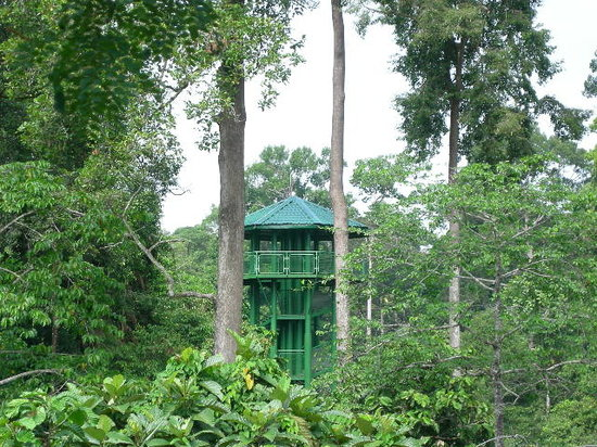Sandakan, Malaysia: One of the canopy towers