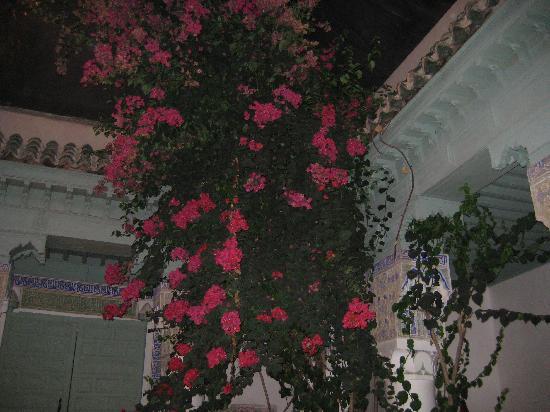 Dar Saria Picture