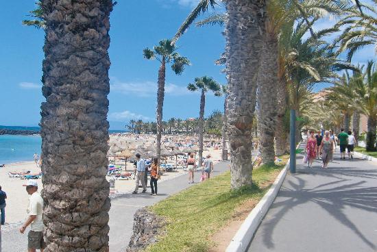 Royal Palm Apartments : Along the foreshore, Los Cristianos, Tenerife