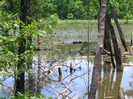 Heard Natural Science Museum & Wildlife Sanctuary : Turtles Sunning Themselves on Woodland Duck Trail