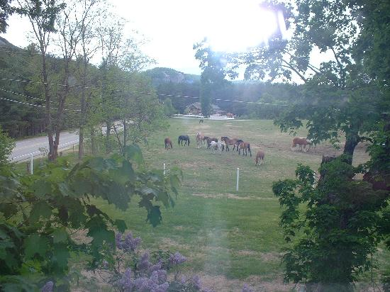 Farm by the River Bed and Breakfast with Stables: the horse's we love