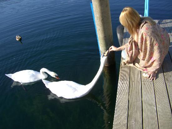 Hotel am See - Die Forelle: Swan's lake