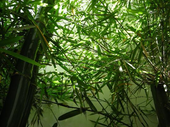 Clarum 101: bamboo