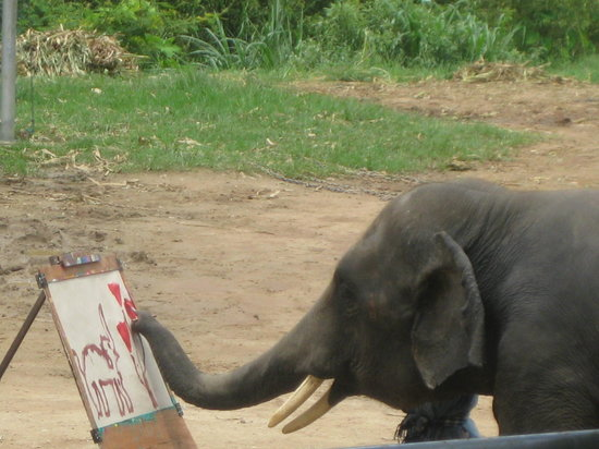 Τσιάνγκ Μάι, Ταϊλάνδη: Mae Tang Elephant Park