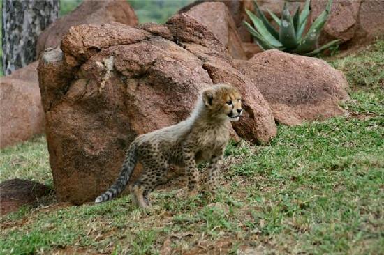 Spirit of Africa Lodge: un animal splendide