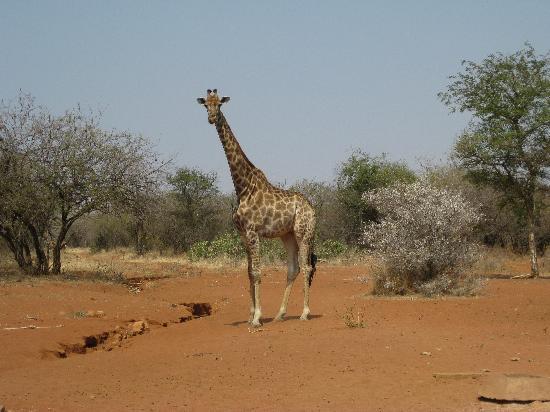 Spirit of Africa Lodge: le premier animal à me souhaiter la bienvenue à mon arrivée