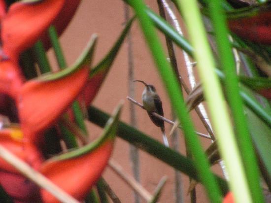 Tropical Pasta: hummingbird