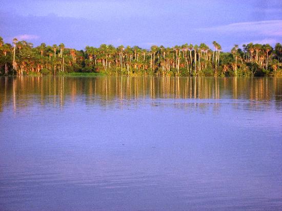 Sandoval Lake Lodge: Sunrise Over Palm Trees