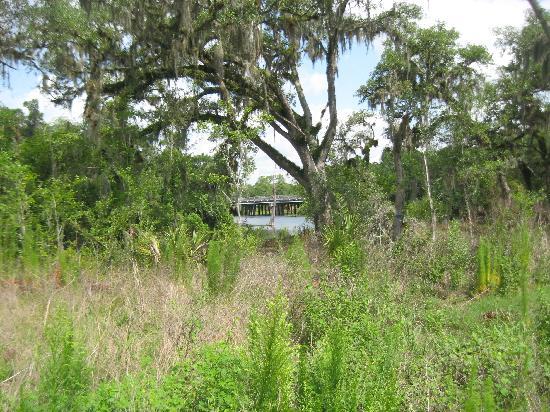 Holiday Inn Express Tampa North - Telecom Park: Walking area for Pets