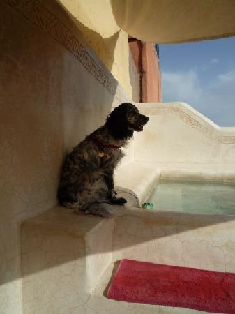 Riad Safa: La piscine