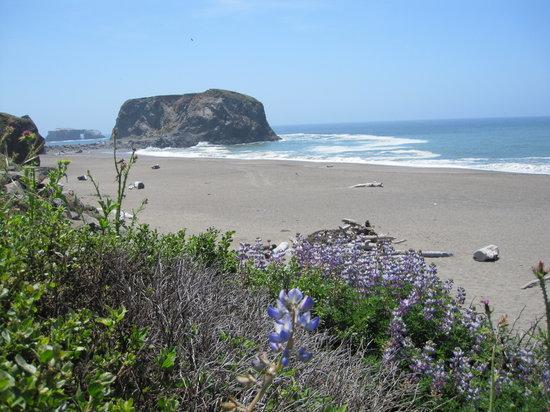 Goat Rock Sonoma Beach