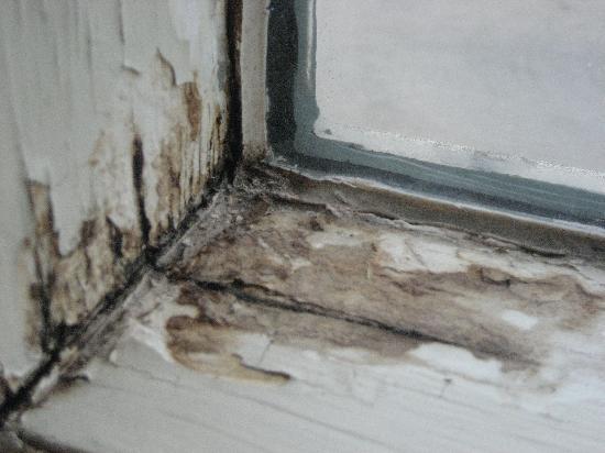 Nice Ramada Edmonton South: Mold On Window Sill