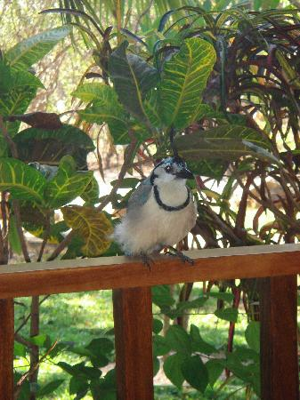 Hotel Bula Bula: Colourful bird