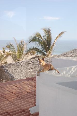 Osprey San Pedrito : Louisa-local dog